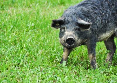 Bioschüssel_Schweine (12)