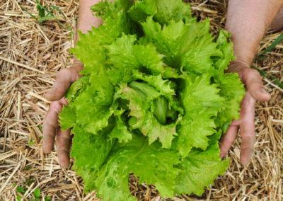 Garten Bioschüssel (6)
