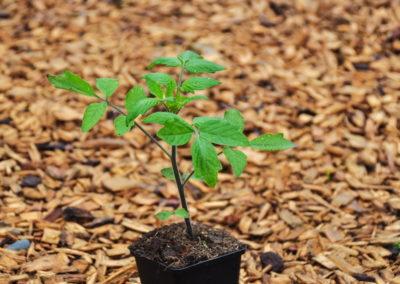 Garten Bioschüssel (3)