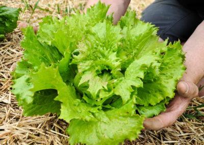 Garten Bioschüssel (5)