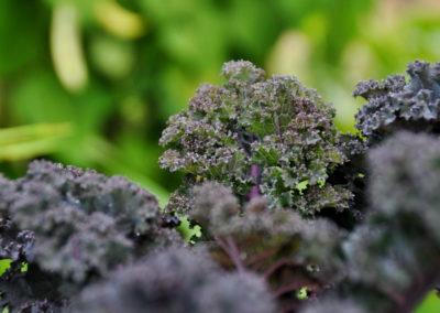 Bioschüssel Gemüse