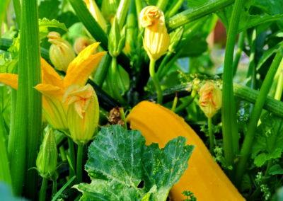 Gemüsegarten Bioschüssel