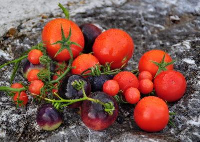 Tomaten aus der Bioschüssel